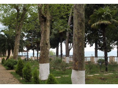 Пансионат Лазурный берег Гагра| Территория, внешний вид